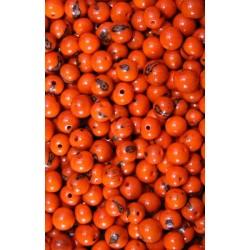 Semilla Asai Naranja